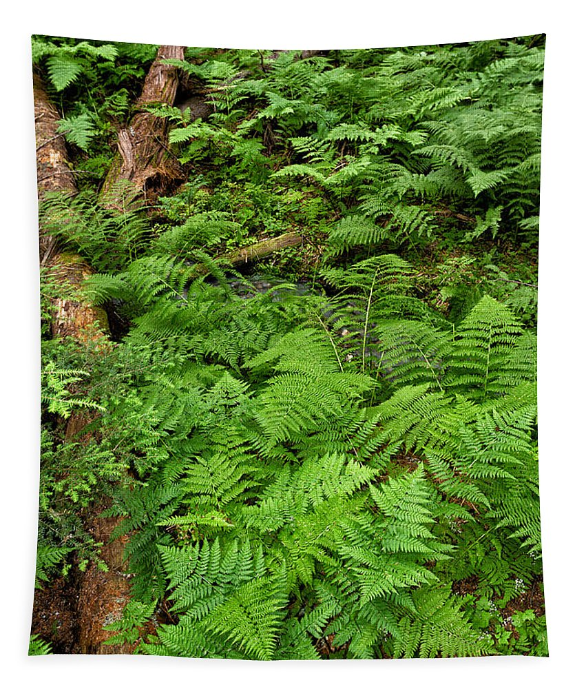 Woods Tapestry featuring the photograph Bracken by Kathleen Bishop