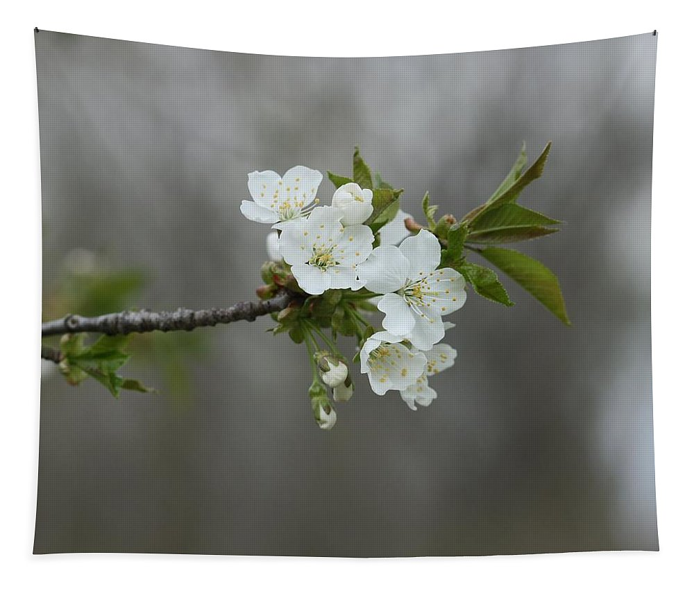 White Flower Tapestry featuring the photograph Branch Of Spring by Gothicrow Images