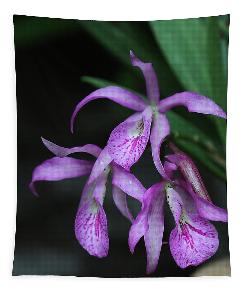 Orchid Tapestry featuring the photograph Brassanthe Maikai Orchid by Judy Whitton