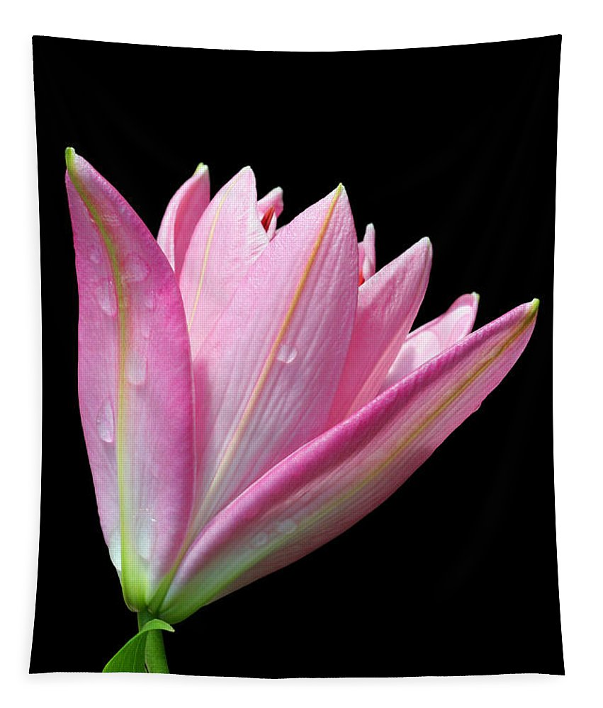 Trumpet Lily Tapestry featuring the photograph Bright Pink Trumpet Lily by Judy Whitton