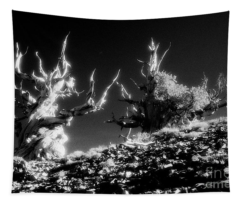 Infrared Tapestry featuring the photograph Bristlecone Twins In Infrared by Paul W Faust - Impressions of Light