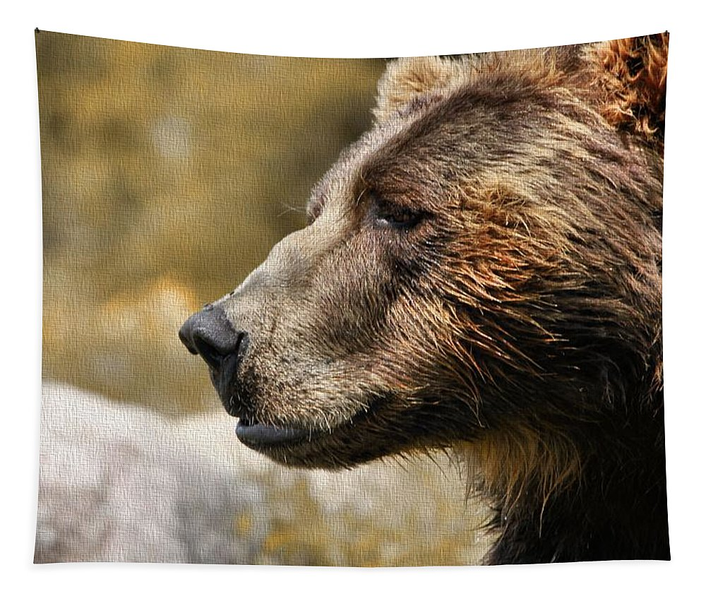 Brown Bear Portrait In Autumn Tapestry featuring the photograph Brown Bear Golden Morning by Dan Sproul