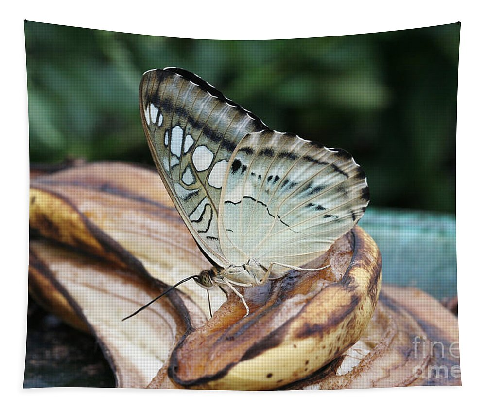Butterfly Tapestry featuring the photograph Brown Clipper Butterfly #3 by Judy Whitton