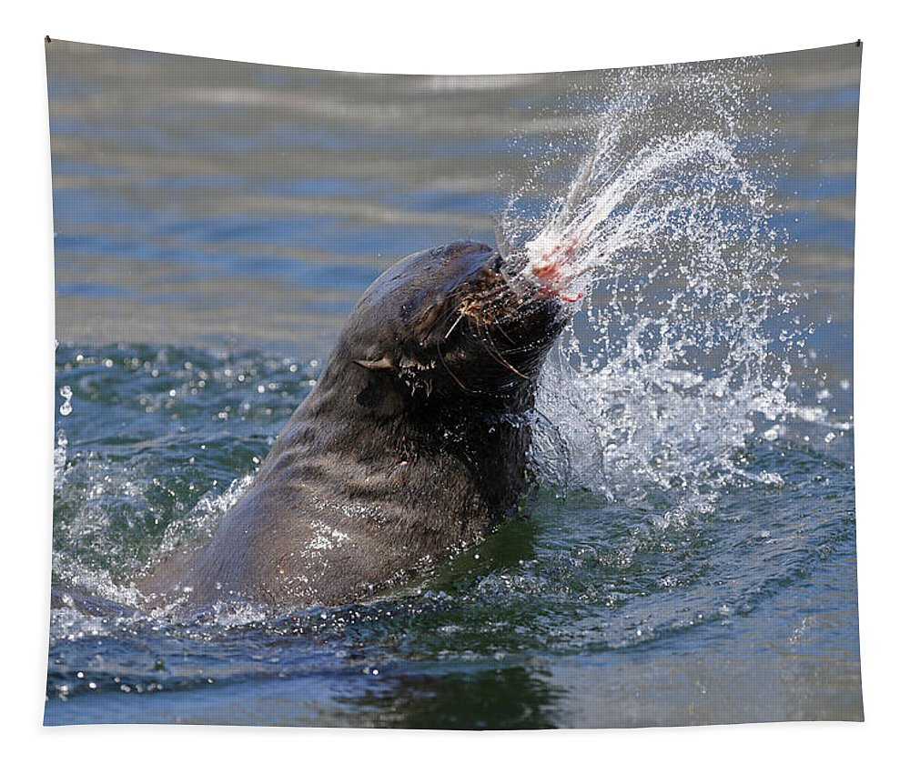 Brown Tapestry featuring the photograph Brown Fur Seal Throwing A Fish Head by Johan Swanepoel