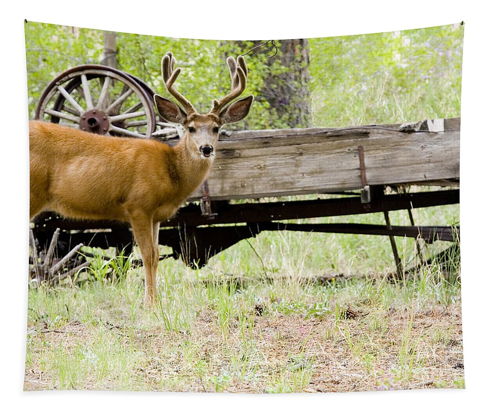 Animal Tapestry featuring the photograph Buck Wagon by Steve Krull