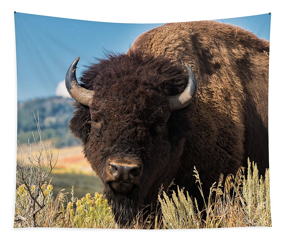 Bison Tapestry featuring the photograph Bull Bison by Kathleen Bishop