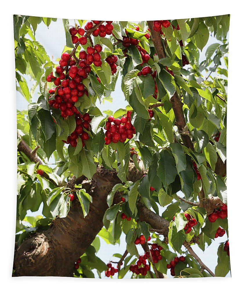 Cherry Tapestry featuring the photograph Bumper Crop - Cherries by Carol Groenen