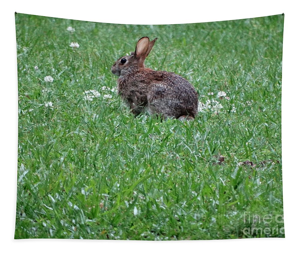 Rabitt Tapestry featuring the photograph Bunny by Joseph Baril
