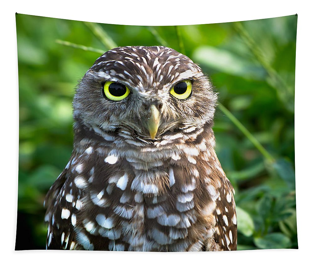 Burrowing Owl Tapestry featuring the photograph Burrowing Owl by Mark Andrew Thomas