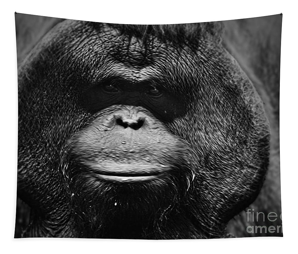 Animal Tapestry featuring the photograph Burrued Face by Ben Yassa