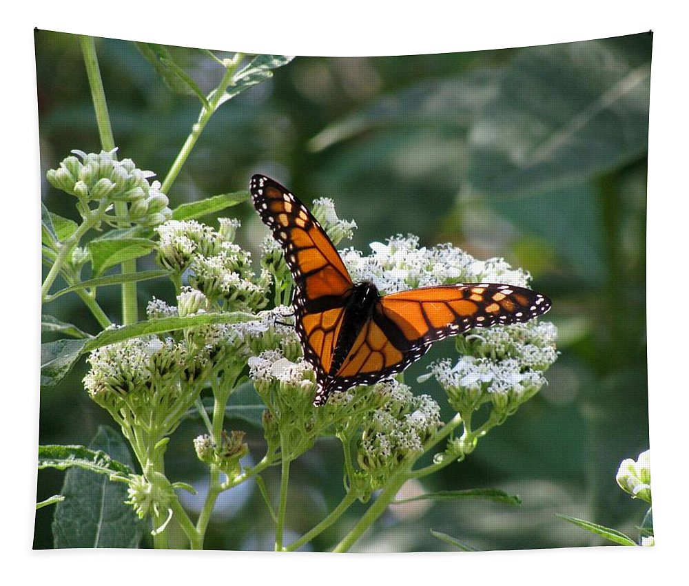 Butterfly Tapestry featuring the photograph Butterfly Garden - Monarchs 09 by Pamela Critchlow