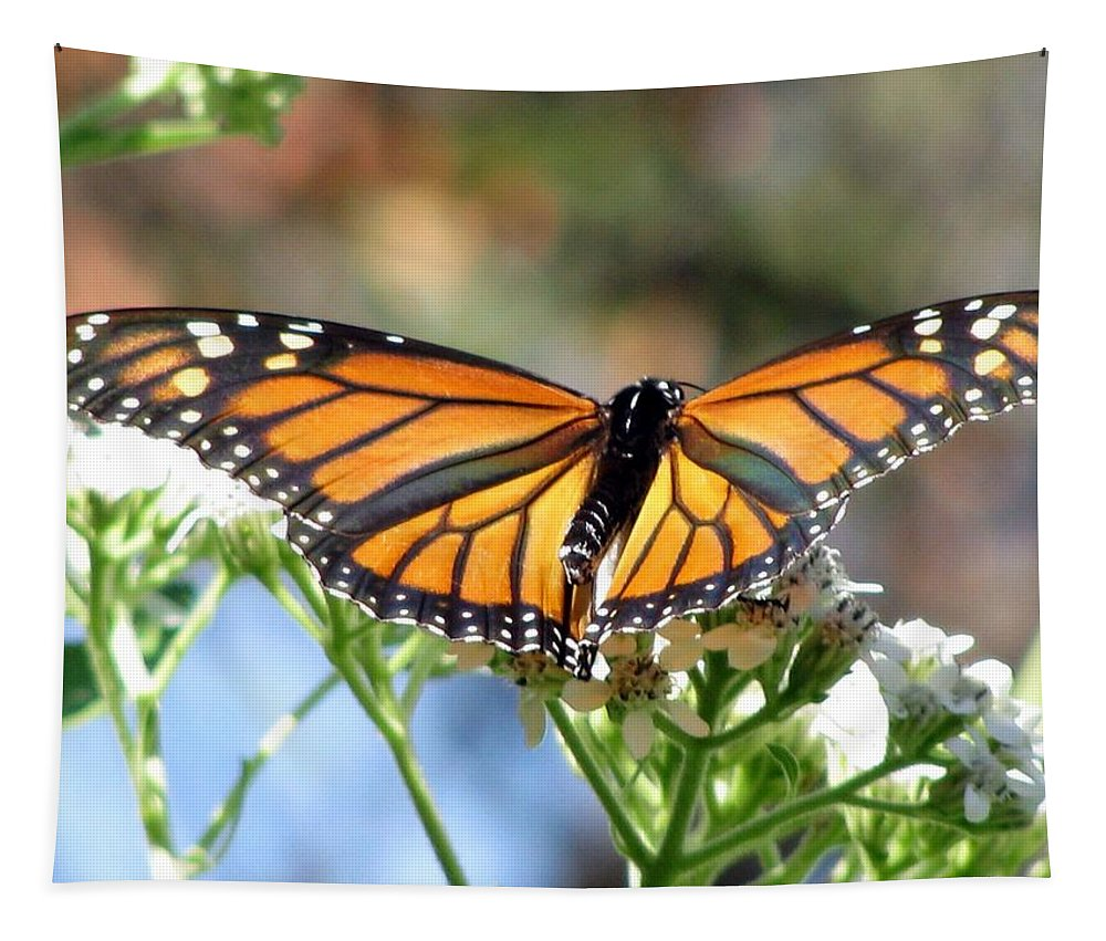Butterfly Tapestry featuring the photograph Butterfly Garden - Monarchs 13 by Pamela Critchlow