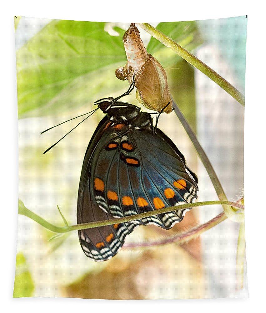 Schmetterling Tapestry featuring the photograph Butterfly Nursery by Jon Woodhams