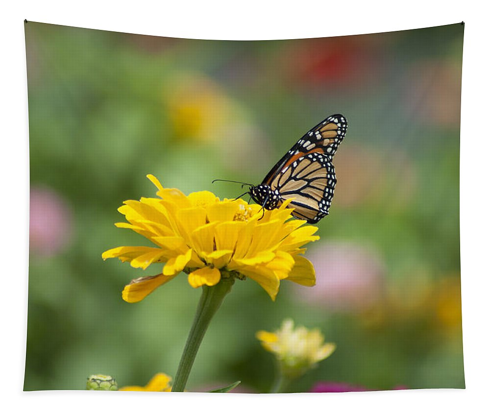 Butterfly Tapestry featuring the photograph Butterfly On Carnation by Bill Cannon