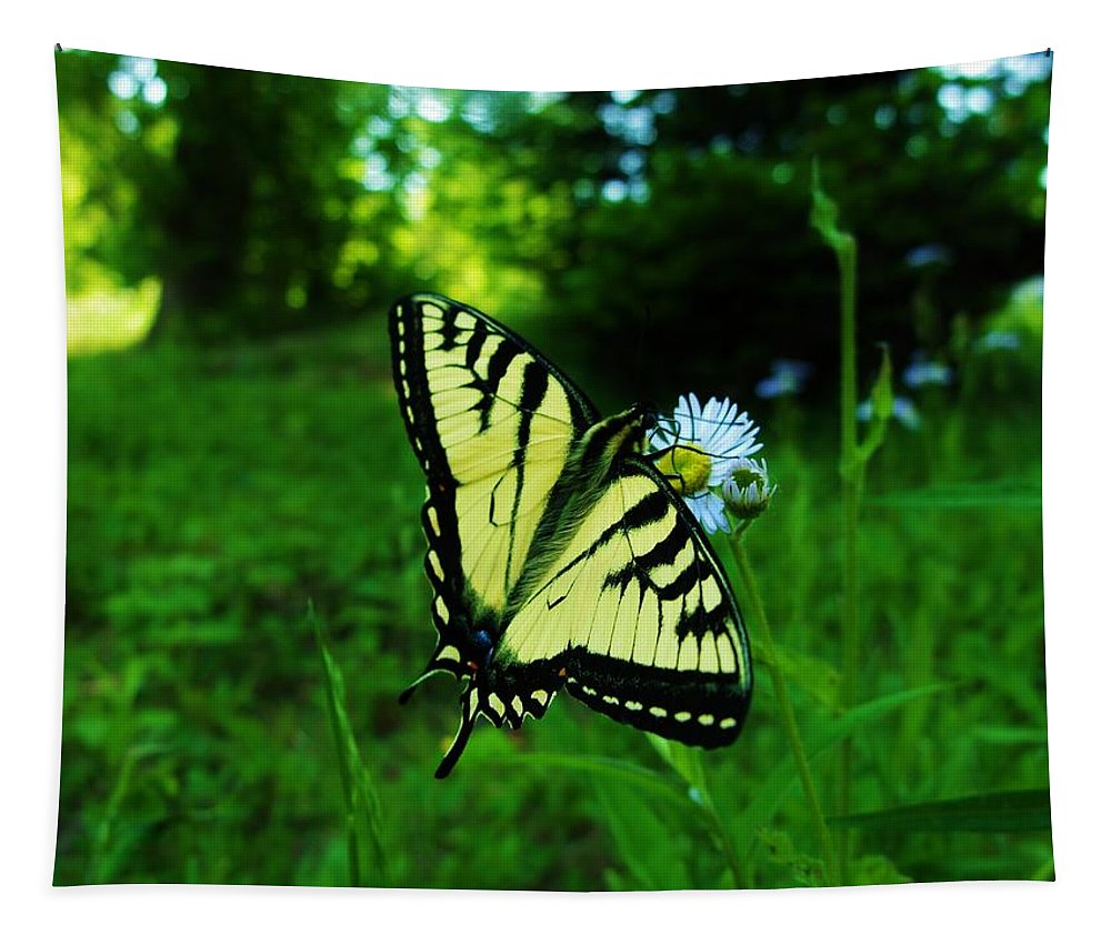 Butterfly Tapestry featuring the photograph Butterfly by Sherman Perry