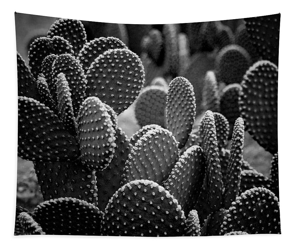 Botanicals Tapestry featuring the photograph Cactus 5252 by Timothy Bischoff
