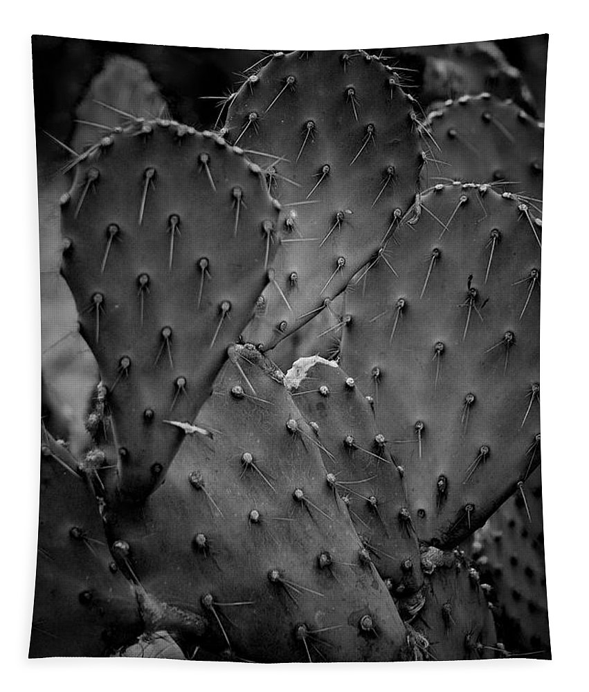 Botanicals Tapestry featuring the photograph Cactus 5264 by Timothy Bischoff
