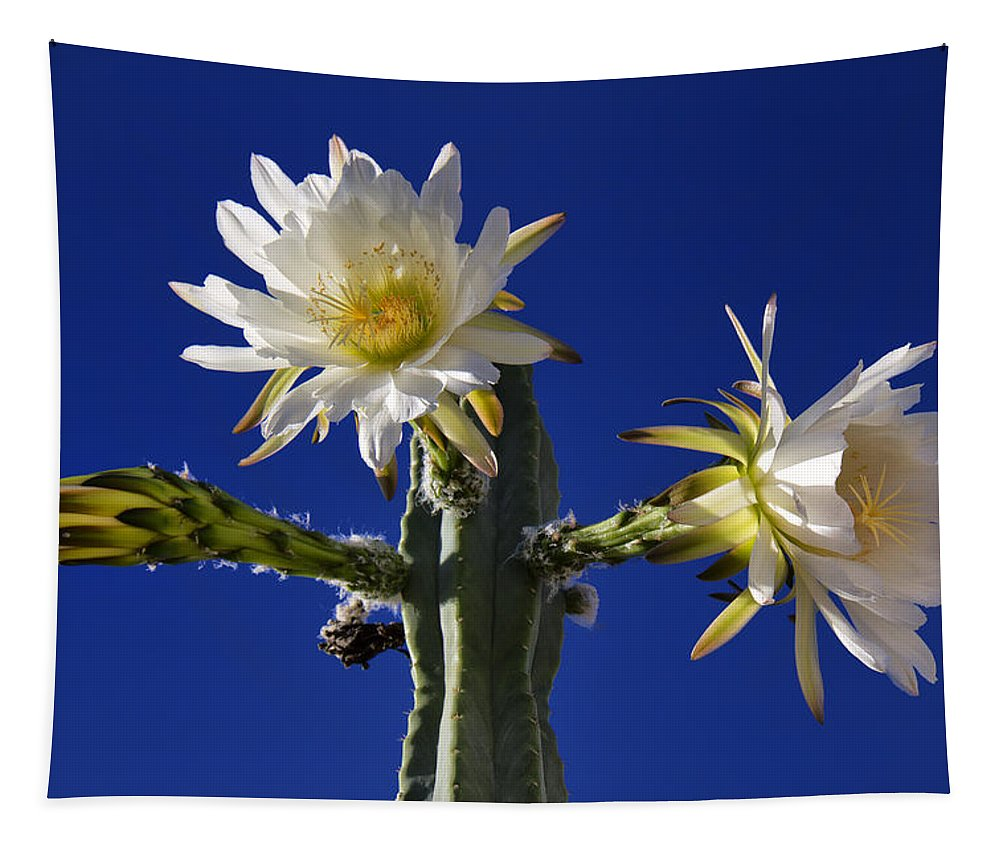 Cactus Tapestry featuring the photograph Cactus Blooms by Dominic Piperata