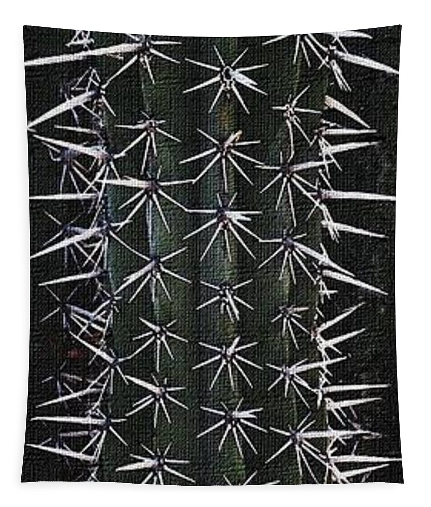 Cactus Spines Tapestry featuring the photograph Cactus Spines by Tom Janca