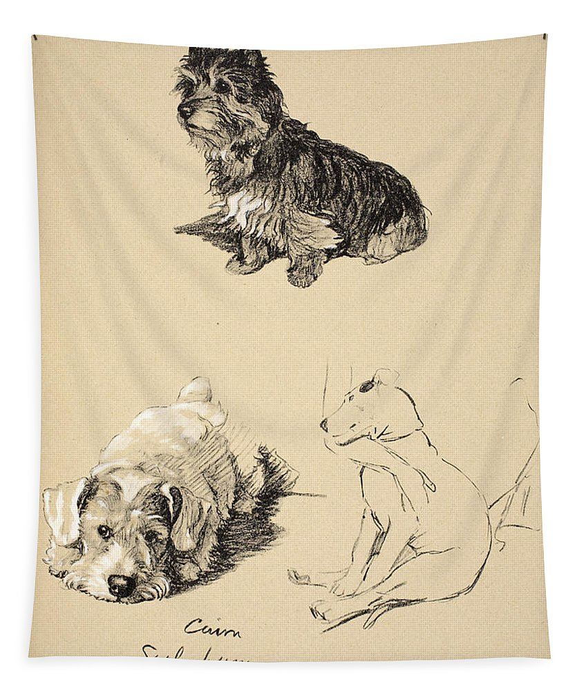 Dog Tapestry featuring the drawing Cairn, Sealyham And Bull Terrier, 1930 by Cecil Charles Windsor Aldin