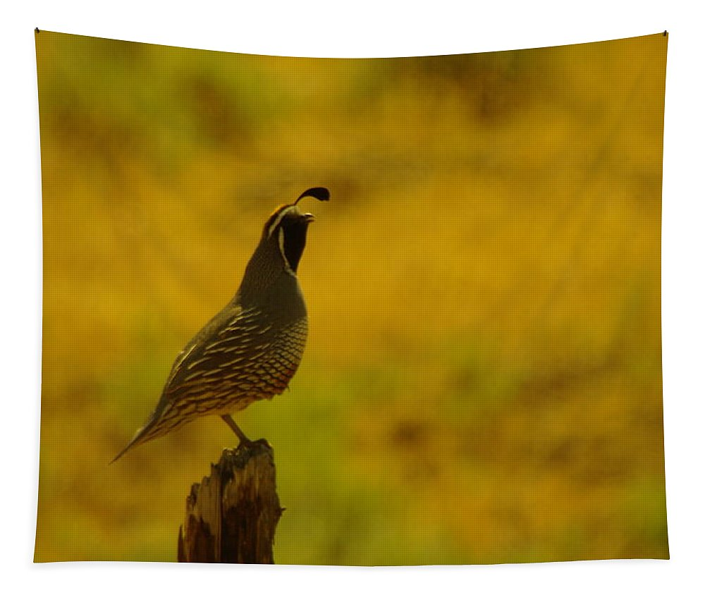 Rooster Quail Tapestry featuring the photograph Calling For Girl Friends by Jeff Swan