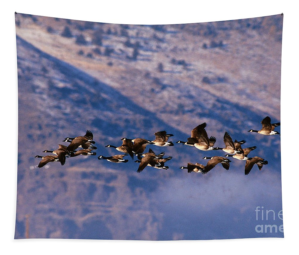 Canada Goose Tapestry featuring the photograph Canada Geese by Art Wolfe
