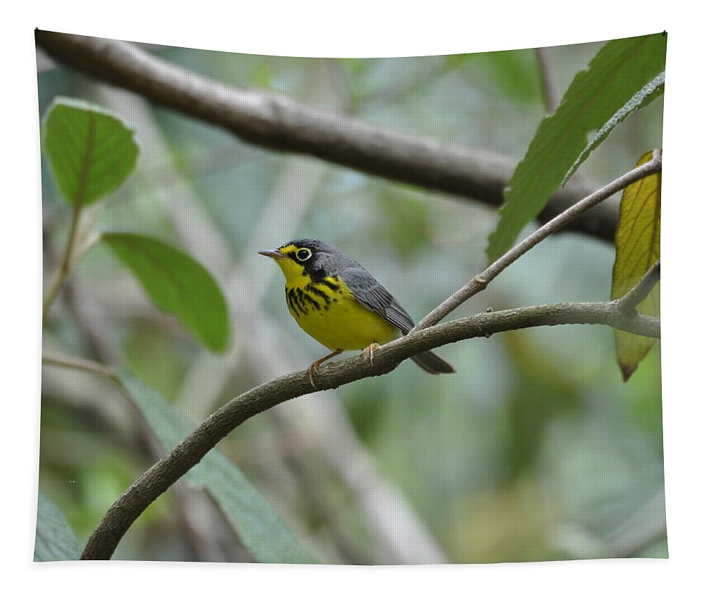 Bird Tapestry featuring the photograph Canada Warbler by Kari McDonald