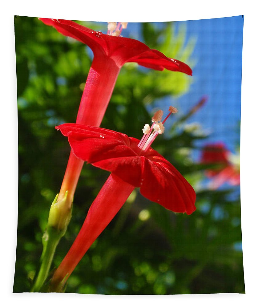 Red Flowers Tapestry featuring the photograph Cardinal Climber Flowers by Christina Rollo