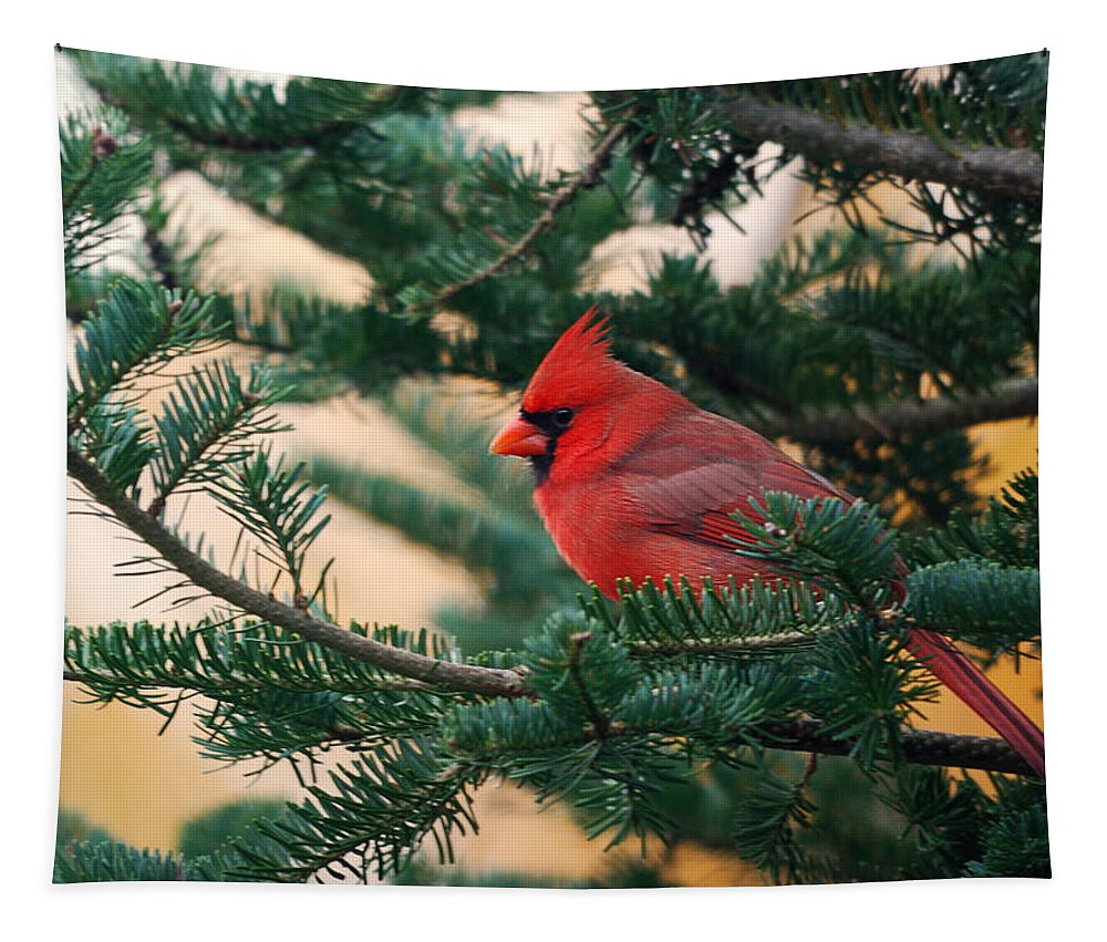 Cardinal Tapestry featuring the photograph Cardinal In Balsam by Susan Capuano