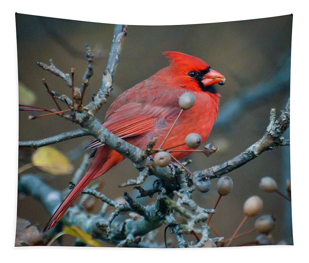 Cardinal Tapestry featuring the photograph Cardinal In The Berries by Kerri Farley