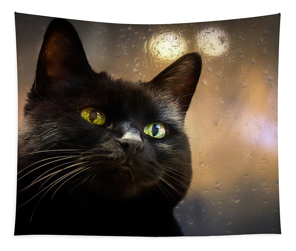 Cat Tapestry featuring the photograph Cat In The Window by Bob Orsillo