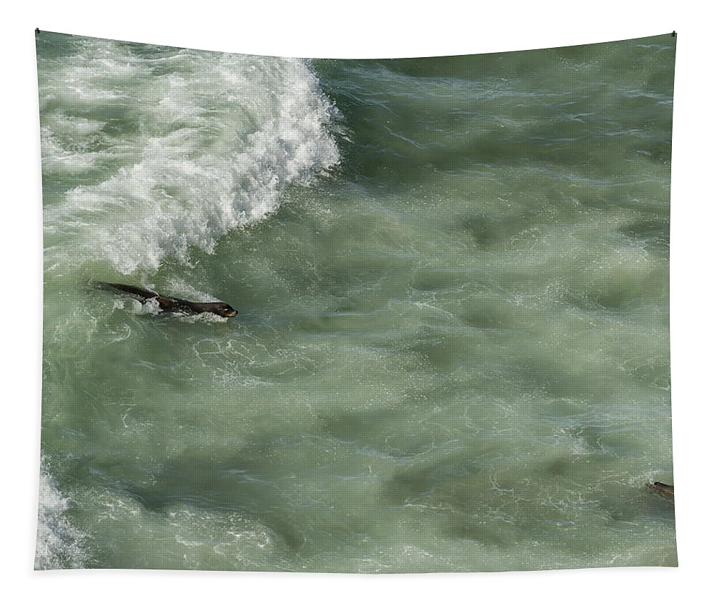 Sea Lion Tapestry featuring the photograph Catching The Wave by Belinda Greb