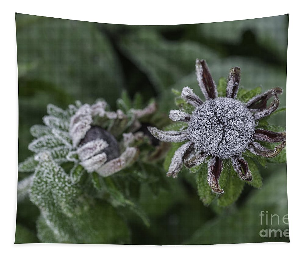 Rudbeckia Tapestry featuring the photograph Caught Cold by Steve Purnell