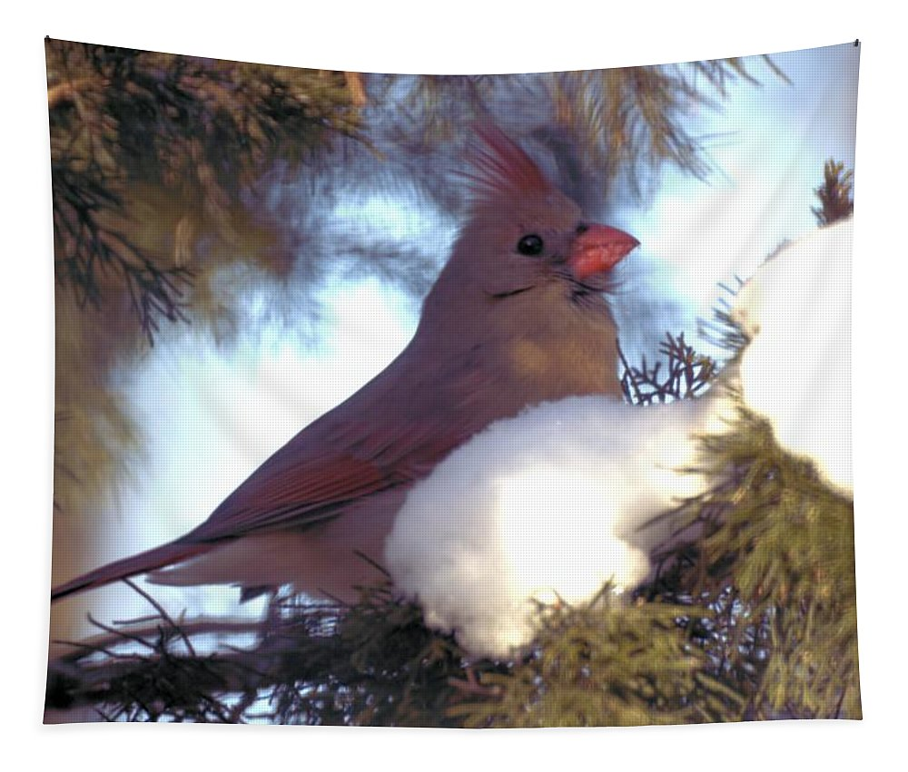 Cardinal Tapestry featuring the photograph Cedar Cardinal by Bonfire Photography