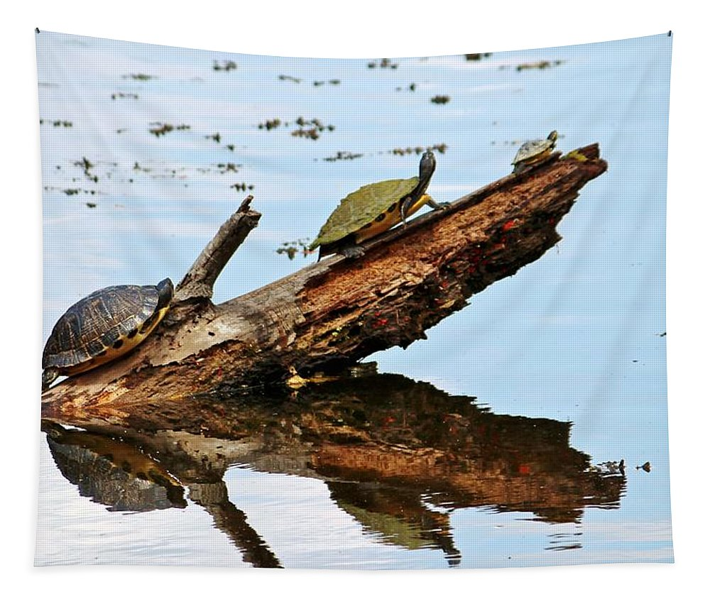 Celebrate Tapestry featuring the photograph Happy Family Of Turtles by Cynthia Guinn
