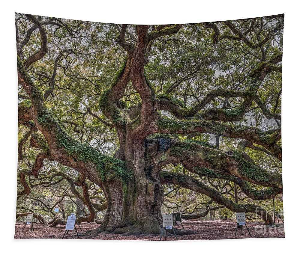 Angel Oak Tree Tapestry featuring the photograph Charleston Angel by Dale Powell