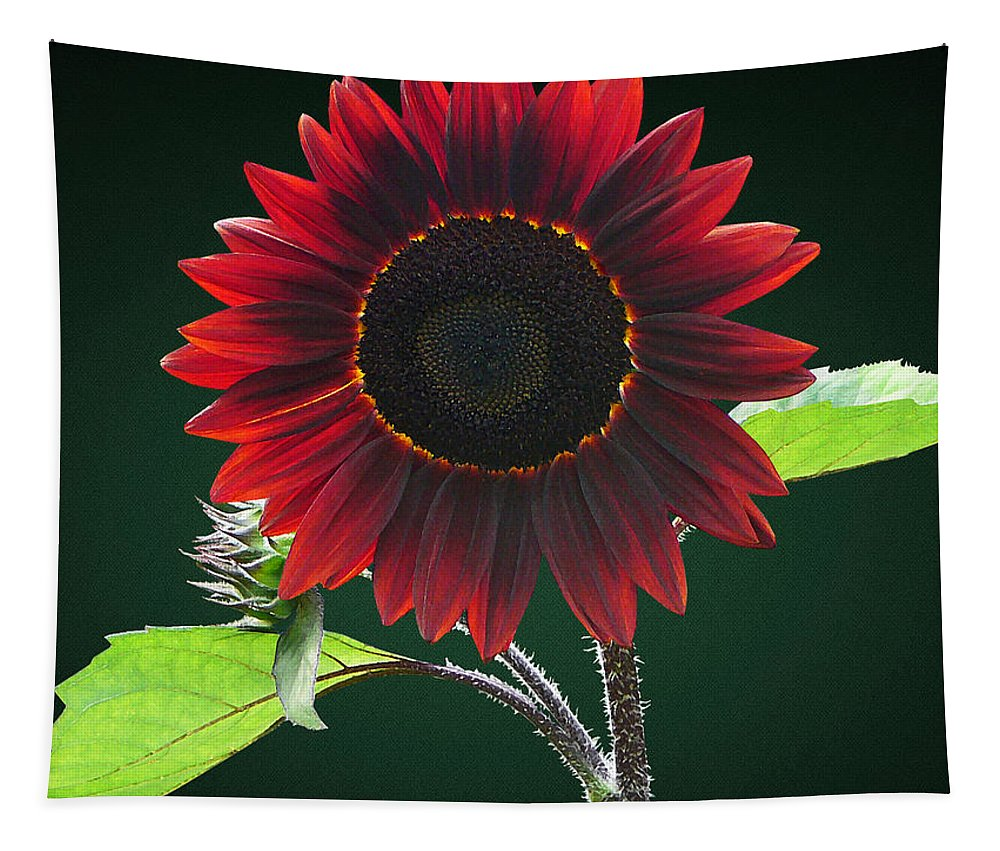 Sunflower Tapestry featuring the photograph Cherry And Chocolate Sunflower by Susan Savad