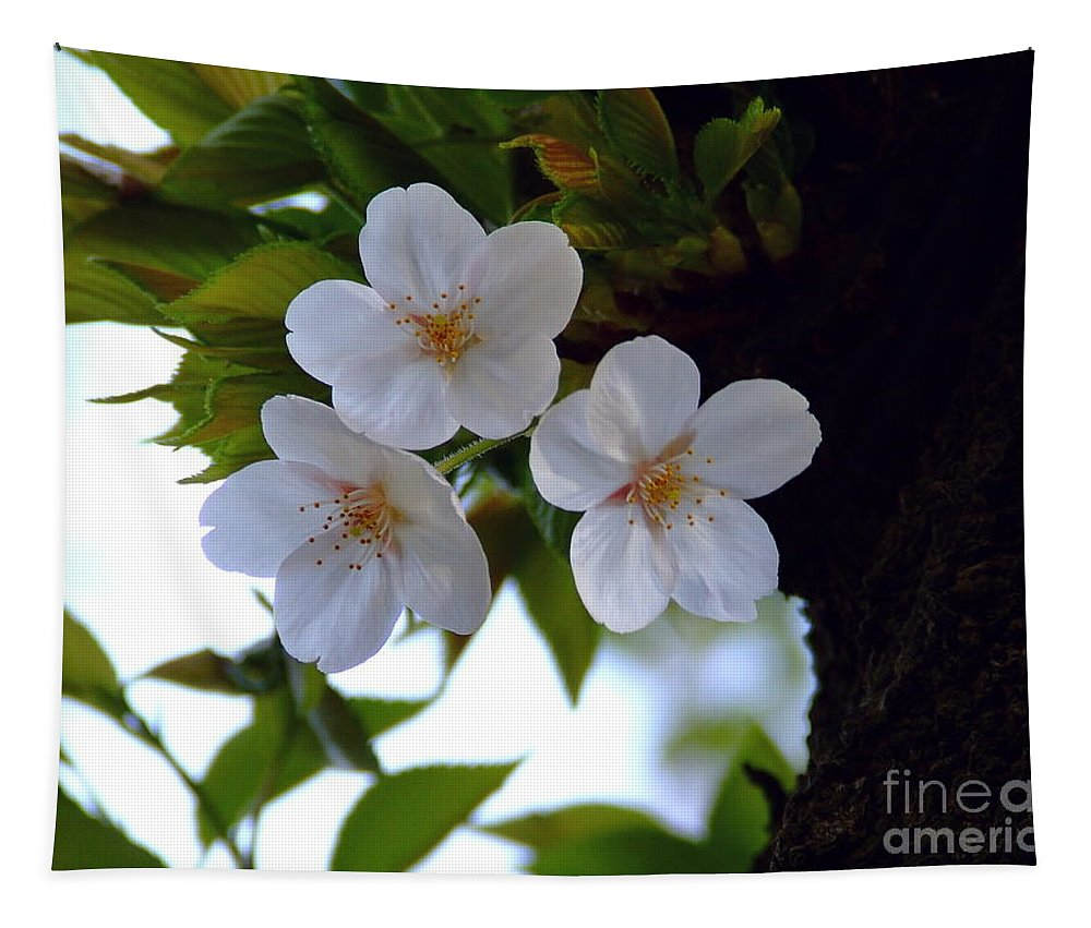 Cherry Blossom Tapestry featuring the photograph Cherry Blossom by Andrea Anderegg