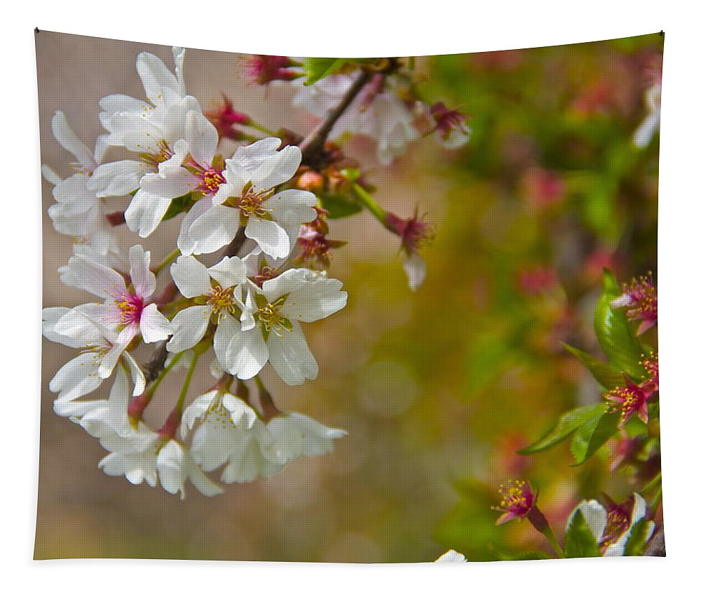 Cherry Tapestry featuring the photograph Cherry Blossoms Galore by Alice Gipson