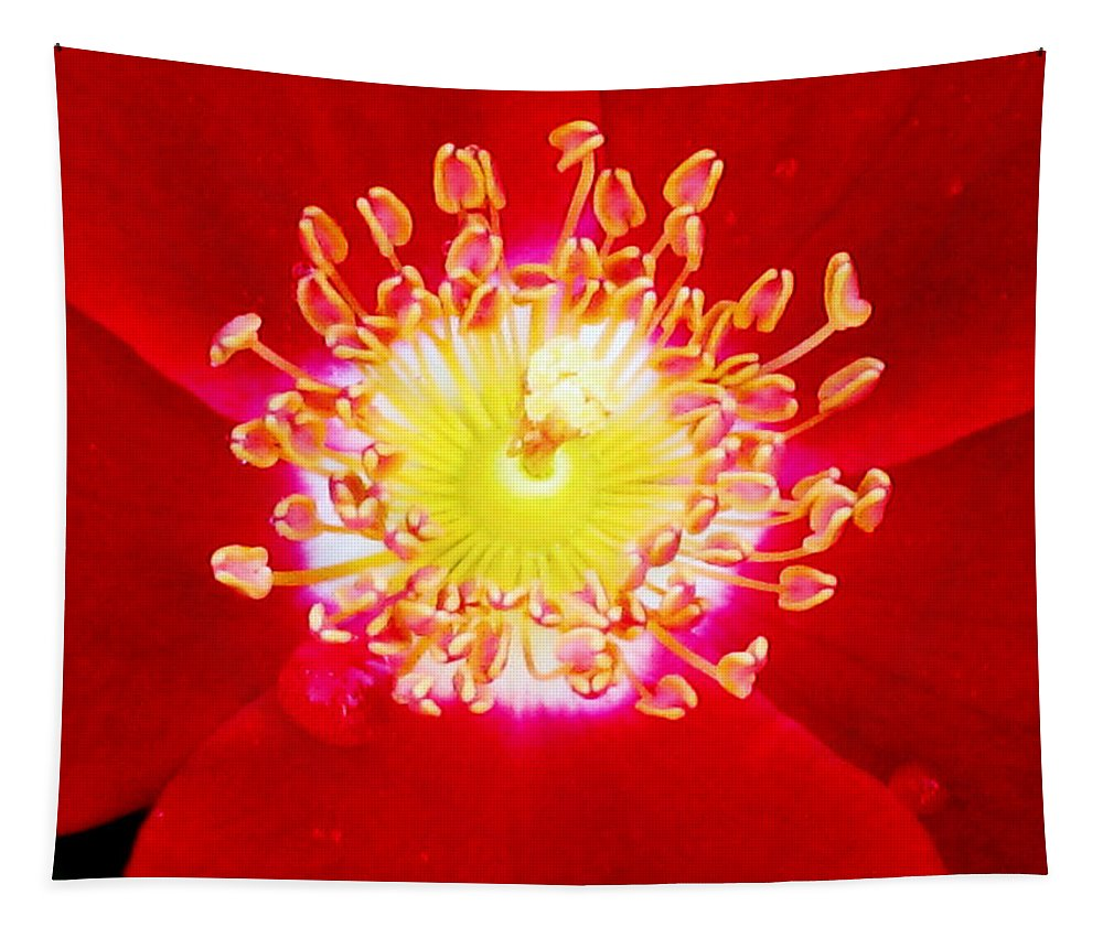 Rose Tapestry featuring the photograph Cherry Pie Rose 02a by Pamela Critchlow