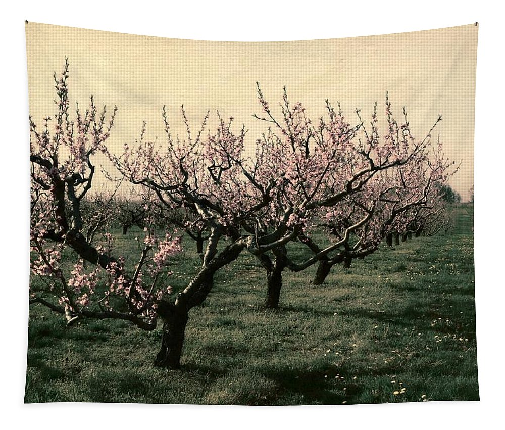 Cherries Tapestry featuring the photograph Cherry Trees 2.0 by Michelle Calkins
