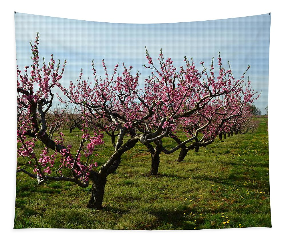 Cherries Tapestry featuring the photograph Cherry Trees by Michelle Calkins
