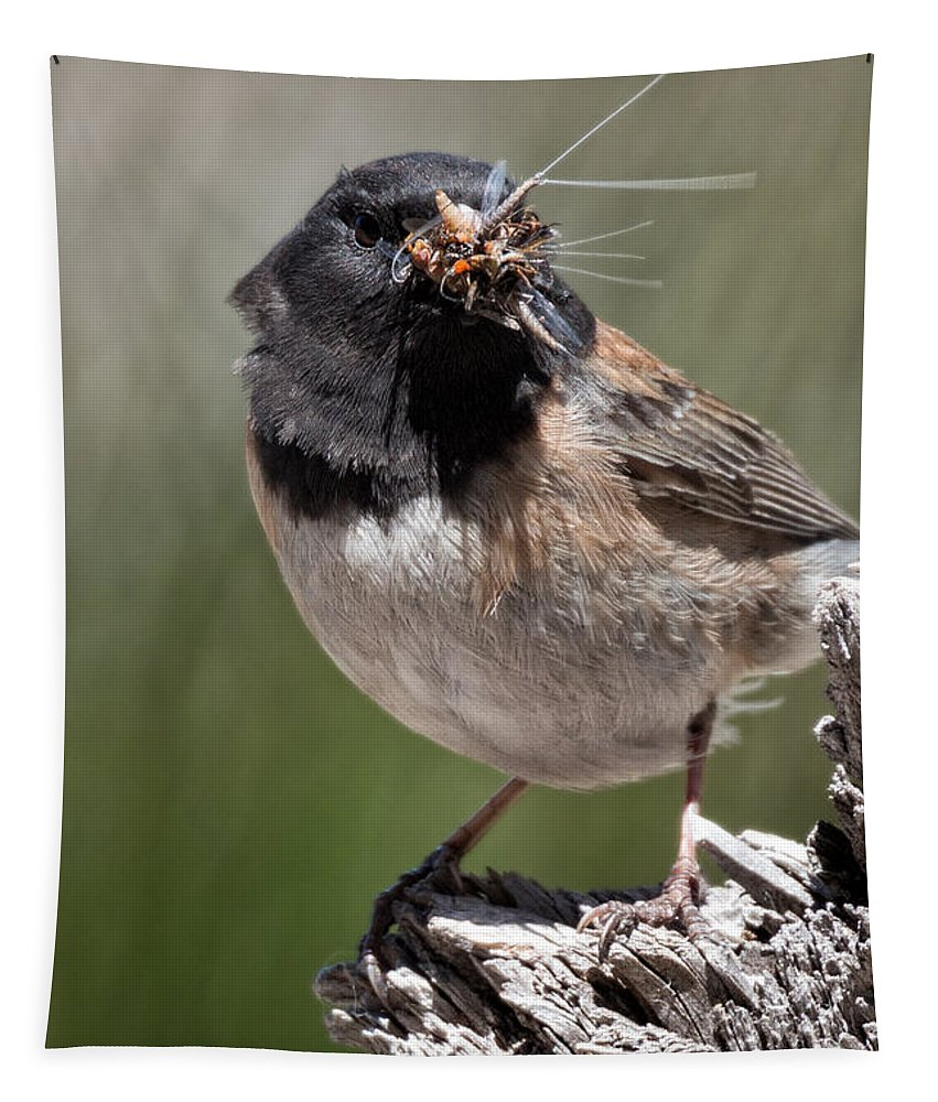Tapestry featuring the photograph Chickadee Bringing Lunch To The Kids by Kathleen Bishop