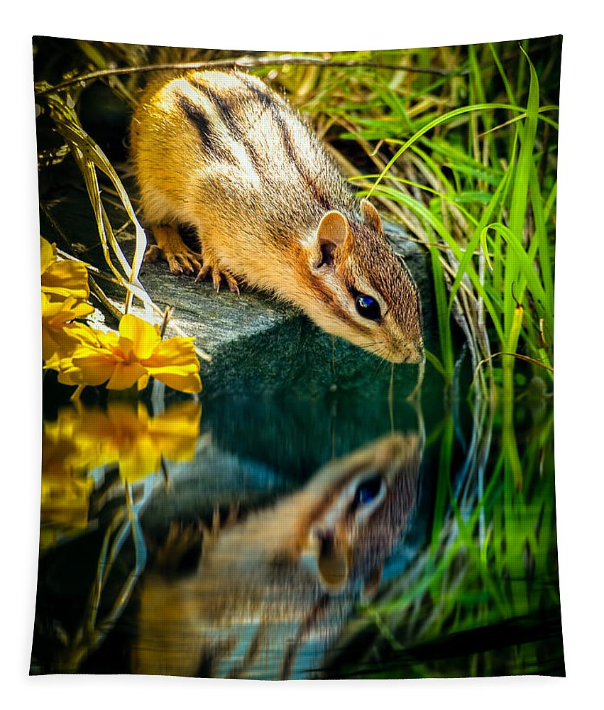 Chipmunk Tapestry featuring the photograph Chipmunk Reflection by Bob Orsillo