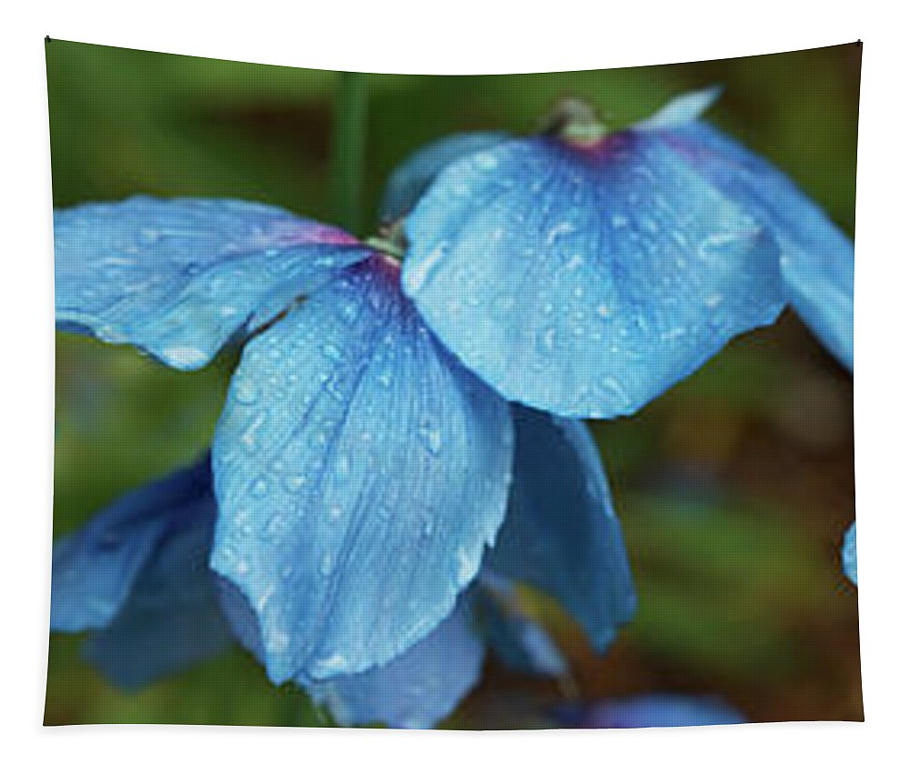 Photography Tapestry featuring the photograph Close-up Of Himalayan Poppy Flowers by Panoramic Images