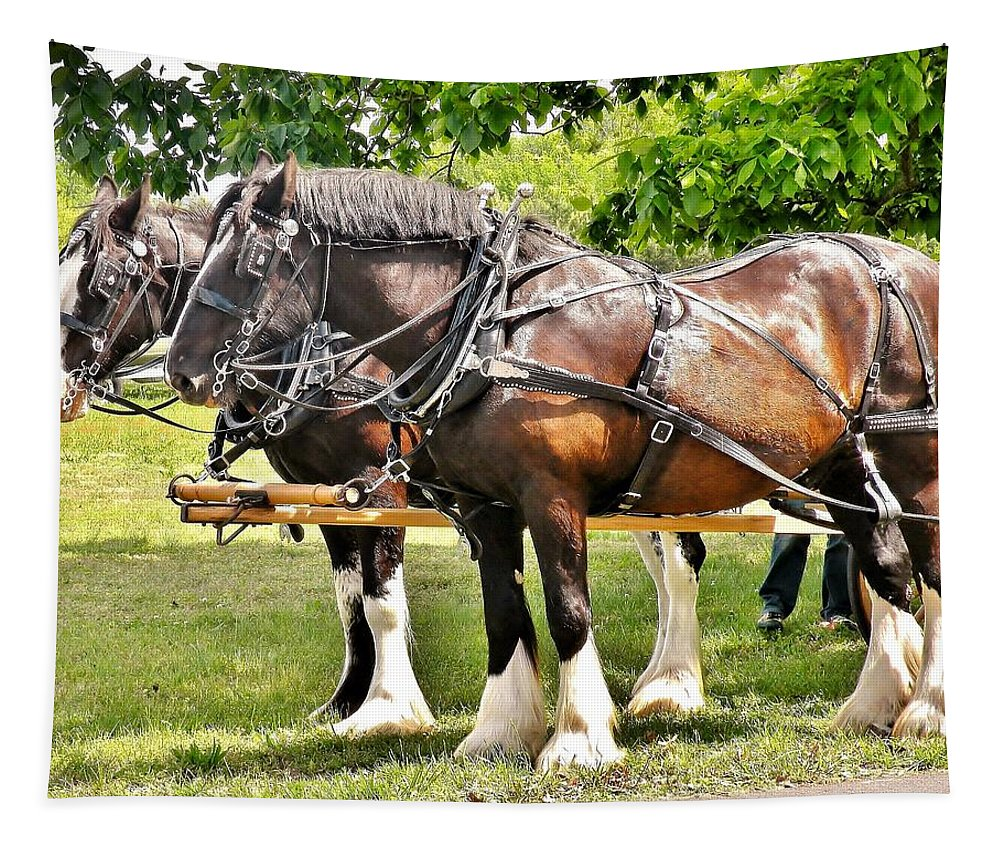 Horse Tapestry featuring the photograph Clydesdale Horses by Kim Bemis