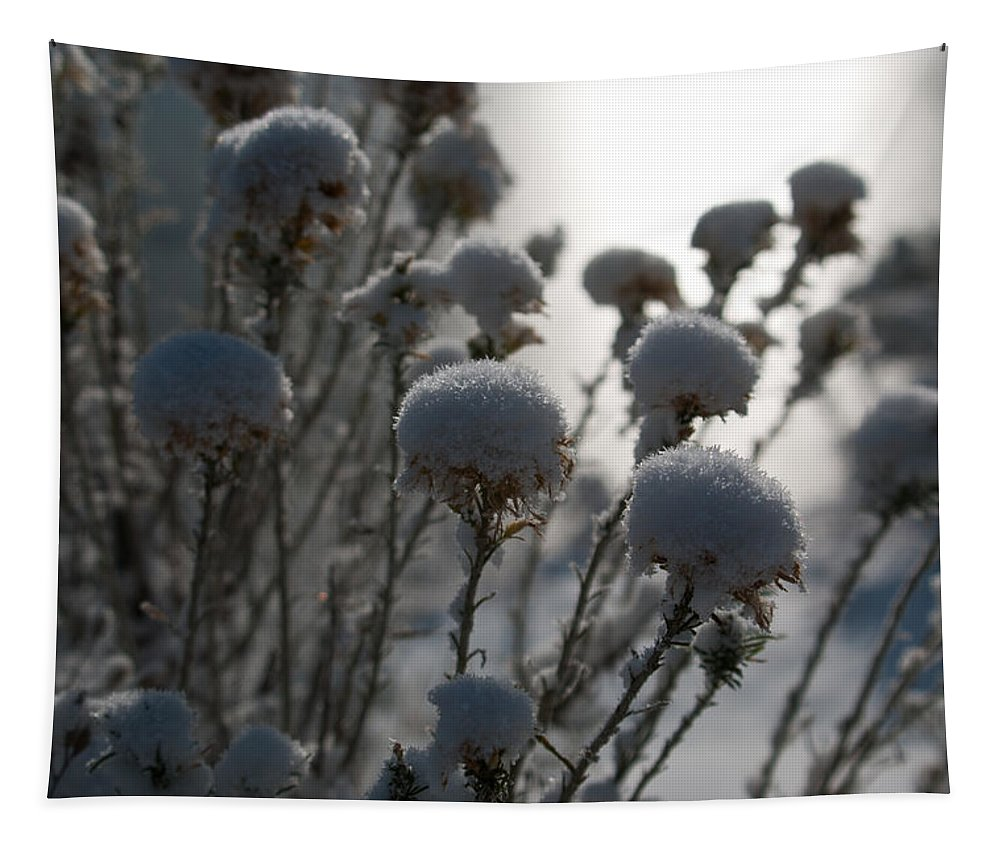 Winter Tapestry featuring the photograph Cold Winter Light by Cascade Colors