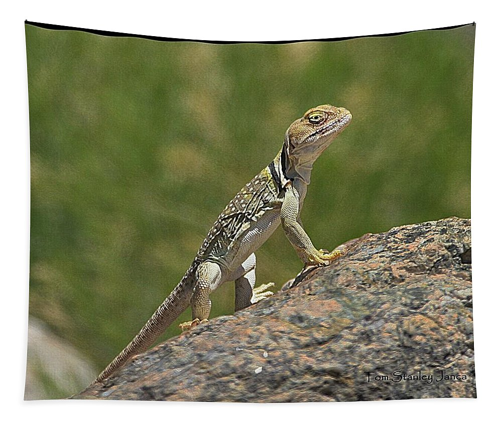 Collared Lizard Tapestry featuring the digital art Collared Lizard by Tom Janca