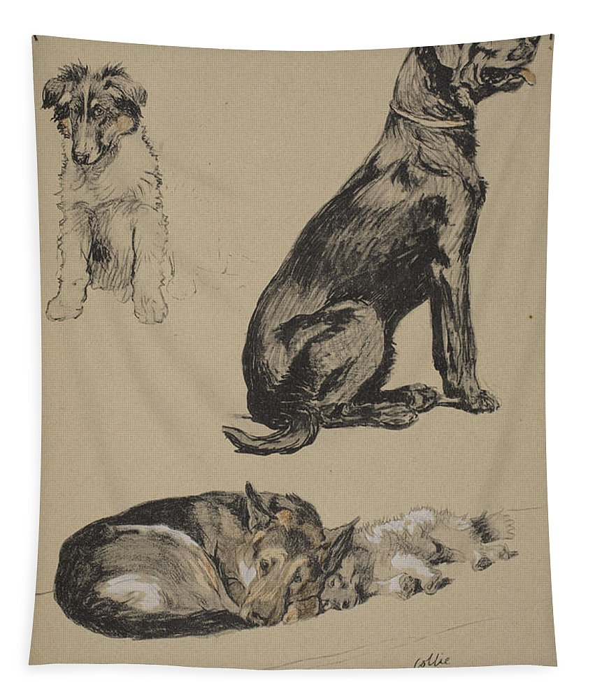 Dog Tapestry featuring the drawing Collie, Retriever, Alstian And Keeshund by Cecil Charles Windsor Aldin
