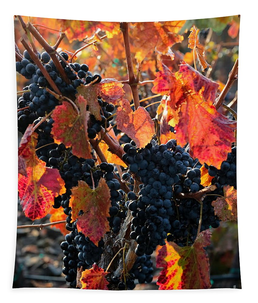 Autumn Harvest Tapestry featuring the photograph Colorful Autumn Grapes by Carol Groenen